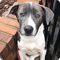 Adopt A Pet :: Keisha - CUMMING, GA