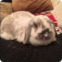 Adopt A Pet :: Tinker - Watauga, TX