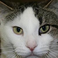 Adopt A Pet :: Jackson - Estherville, IA
