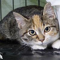 Adopt A Pet :: Ginger - Marlinton, WV