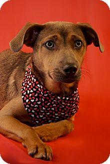 Hound (Unknown Type) Mix Puppy for adoption in Marion, Wisconsin - Sandy