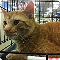 Adopt A Pet :: Ross - Pittstown, NJ