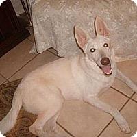 Adopt A Pet :: Chione - Green Cove Springs, FL