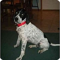 Adopt A Pet :: Winberie- ADOPTION PENDING! - Columbus, OH