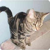 Adopt A Pet :: Brett - Montreal, QC