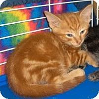 Adopt A Pet :: Carmine - Richmond, VA