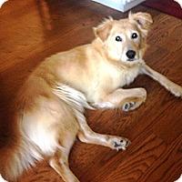 Adopt A Pet :: Stevie-Rae - Orange, CA