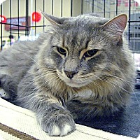 Adopt A Pet :: Harley - Pittstown, NJ