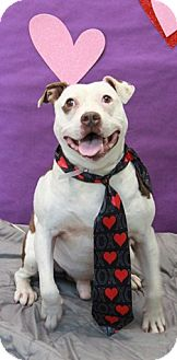 Bulldog Mix Dog for adoption in Brookhaven, New York - Fuego