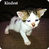 Adopt A Pet :: Kindest - Bentonville, AR