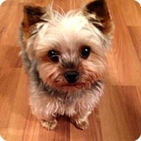 Adopt A Pet :: Lucy - Bettendorf, IA
