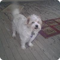 Adopt A Pet :: CARLOS - Upper Sandusky, OH