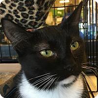 Adopt A Pet :: Trixi - Winchester, CA