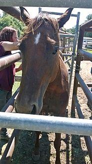 Quarterhorse Mix for adoption in Hitchcock, Texas - Kachina