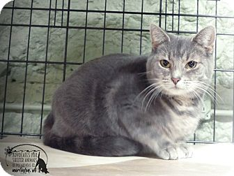 Domestic Shorthair Cat for adoption in Marlinton, West Virginia - Cherie--RESCUED!