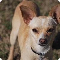 Adopt A Pet :: Charo - Muldrow, OK