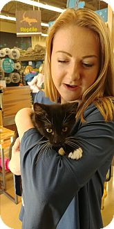 Domestic Shorthair Kitten for adoption in Ogden, Utah - Panda