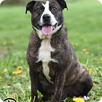 Adopt A Pet :: Doug - special needs - Broadway, NJ