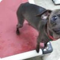 Adopt A Pet :: number 20 - Cripple Creek, CO