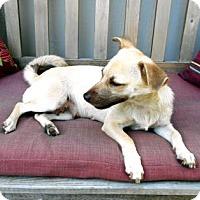 Adopt A Pet :: Maggie - Santa Fe, TX