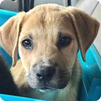 Adopt A Pet :: Lotus - CUMMING, GA