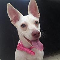 Adopt A Pet :: Rashi * - Miami, FL