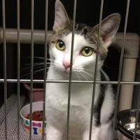 Adopt A Pet :: Eugenia - Savannah, TN