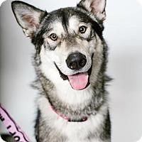 Adopt A Pet :: Mya - Brooklyn Center, MN