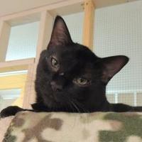 Adopt A Pet :: Cubby - Westville, IN