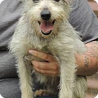 Adopt A Pet :: Chloe - Joplin, MO