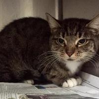 Adopt A Pet :: Mamma Cat - Clarkesville, GA