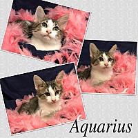 Adopt A Pet :: Aquarius - Hearne, TX