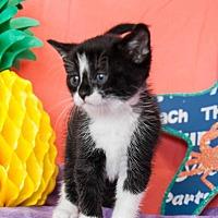 Adopt A Pet :: Ariel III - Muskegon, MI