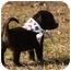 Photo 4 - Labrador Retriever Mix Puppy for adoption in Cranford, New Jersey - Blake