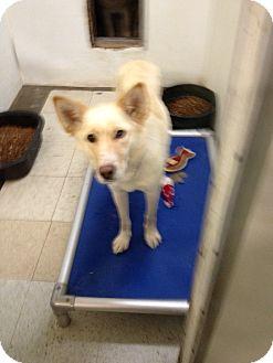 Husky Mix Dog for adoption in North Pole, Alaska - Puff