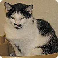 Adopt A Pet :: Kitty - Woodstock, IL