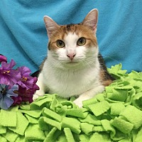 Adopt A Pet :: Twix - Chattanooga, TN