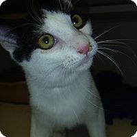 Adopt A Pet :: Robin - Hamburg, NY