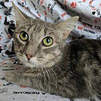 Adopt A Pet :: Sweet Boy - Phoenix, AZ