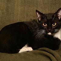 Adopt A Pet :: Bibbs - Sanford, FL