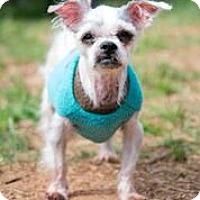 Adopt A Pet :: Freeze Pop - Alpharetta, GA