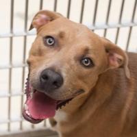 Adopt A Pet :: Hutch - Bryan, TX