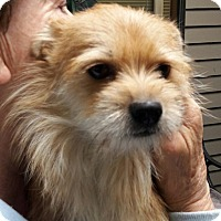Adopt A Pet :: Mazie - Salem, OR
