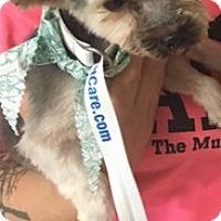 Adopt A Pet :: Moe - Muskegon, MI