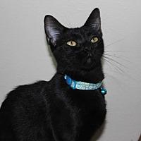 Adopt A Pet :: Ivory - Cuero, TX