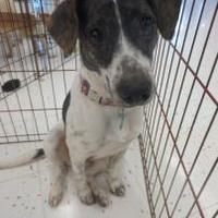 Adopt A Pet :: Liberty - Beaumont, TX