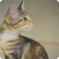Adopt A Pet :: Minkie - San Leon, TX