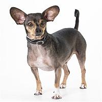 Adopt A Pet :: Toby - Monterey, CA