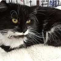 Adopt A Pet :: Beana (KL) - Little Falls, NJ