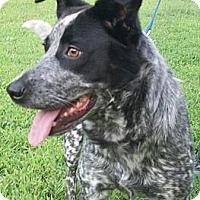 Adopt A Pet :: Lucy - Siler City, NC